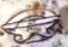 E:\Письменность_Пришельцев\Picture_Glyph_III\K018 - Copy (2).PNG